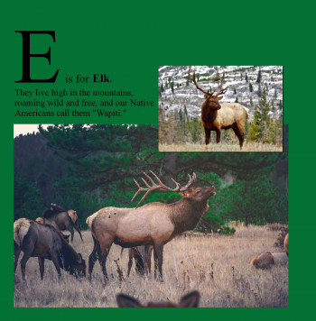 E is for Elk